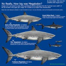 biggest megalodon shark megalodon size part 2 by harry the fox on deviantart