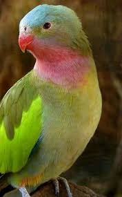 370 best animals parrots cockatoos and the littler ones
