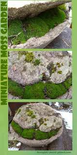 miniature japanese garden a bowl some moss and a rock