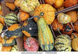 gourd stock images royalty free images vectors