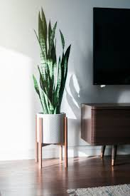 Home Decorating Plants Best 25 Indoor Plant Decor Ideas On Pinterest Plant Decor