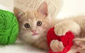 wallpaper cats free download wallpaper galleries