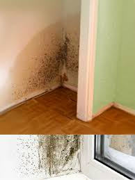 master service green mold removal downers grove water damage