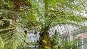 trees are also native plants plant collections phipps conservatory and botanical gardens