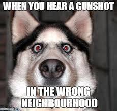 Memes Scared - scared dog memes imgflip