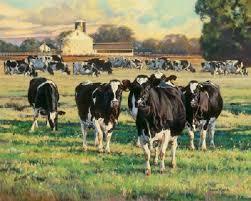 28 best bonnie mohr images on farm cows