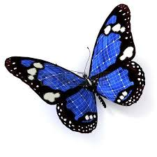3d butterfly stock photos royalty free business images