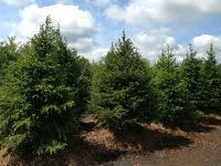 indiana trees trees for sale indianapolis tree farm nursery