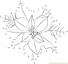 poinsettia coloring pages connect the dots poinsettia flower flowers u003e poinsettia dot to