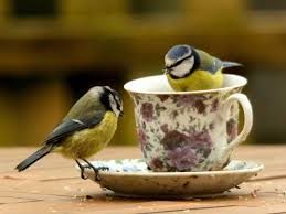 how to encourage birds to breed in your garden you for animal