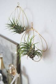 home decor diy hanging and tabletop air plants