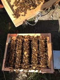 eco bee box modern beehives u0026 bees may 2016