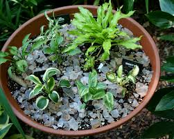 common dish garden plants home outdoor decoration