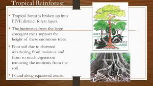 5 Dominant Plants In The Tropical Rainforest Biomes Of The World Classified Based On Temperature Precipitation