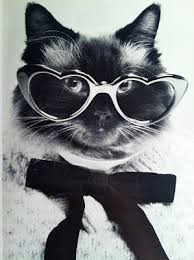 cat high yearbook cat high the yearbook feline fashionistas