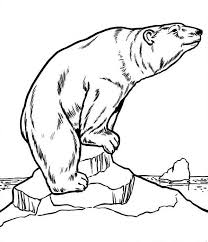 big polar bear colouring big polar bear colouring