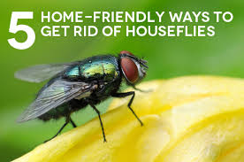 Best Way To Get Rid Of Mosquitoes In Your Backyard 5 Home Friendly Ways To Get Rid Of Houseflies The Maids Blog