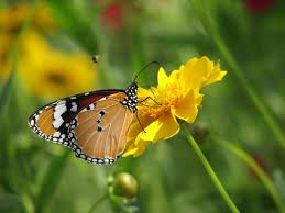 28 flowers with butterflies gallery for gt butterflies on