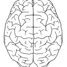Anatomy Coloring Pages Brain Coloring Page