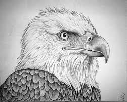 bald eagle pencil drawings 2d art pencil art eagles and eagle