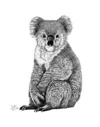 pin by kim gatto on koala pinterest koala illustration