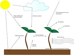 light and plant growth commercial hydroponic farming the effect of light and temperature