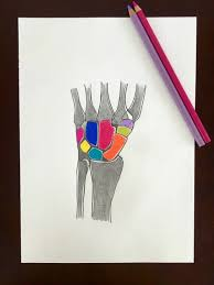 original radiology wall art x ray wrist bones anatomy colored