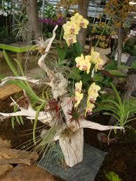 Indoor Plant Arrangements Orchid U0026 Tillandsia Arrangement On Driftwood Gardening