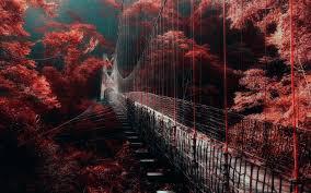nature landscape red forest bridge mist trees walkway