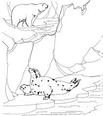 bear seals color