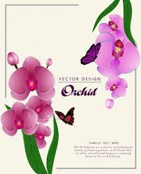orchids flowers nature background purple orchids flowers ornament vectors stock in