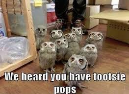 Funny Owl Meme - funny owl animal meme