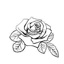 rose sketch black outline on white background vector