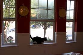 Interior Cat Door by Plisse Retractable Screens And Cats A Better Solution