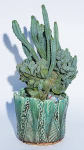 where to buy upcoming shows events cactus and succulents