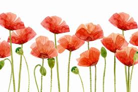 poppies flowers digital clipart watercolor poppies flower clipart by swiejko