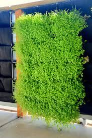 Verticle Gardening by Florafelt Pro System U2014 Florafelt Vertical Garden Systems