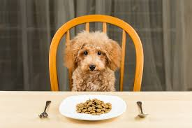 dogs at dinner table thanksgiving dinner for dogs snooty pets