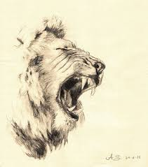 pencil drawn lion lion watersoluble pencil by andreaschepisi