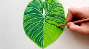 timelapse drawing a tropical leaf with faber castell soft