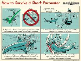 how to survive a shark attack the art of manliness