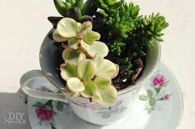 8 adorable teacup planters garden lovers club