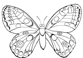 coloring pages insects bugs insects coloring pages insect coloring page butterfly and insect