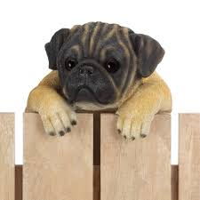 climbing pug