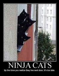 Ninja Memes - lol s club 盪 laugh out loud s club 盪 ninja cats