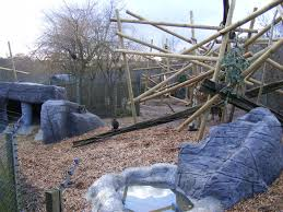 mandrill enclosure at colchester zoo 13 february 2009 zoochat