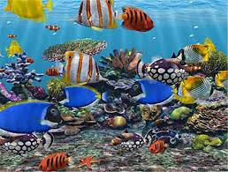 marine ornamental fish buy in denpasar