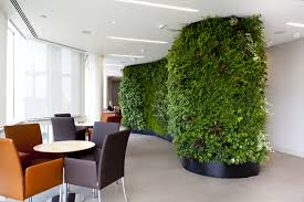 three plants for cleaner air in your office foliage design