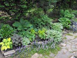 vegetable garden shade tolerant interior design ideas