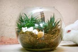 Indoor Plants Arrangement Ideas by Glass Bowl Plants Ozziesterrariums